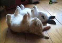 Catching a nap! #Rabbits Tired bunnies! http://astore.amazon.com/rabbithutch-20