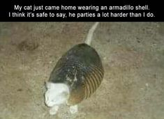 Funny pictures :: armadillo :: cat :: party hard :: animal :: meme / funny pictures & best jokes: comics, images, video, humor, gif animation - i lol'd Funny Animal Memes, Cute Funny Animals, Funny Animal Pictures, Cat Memes, Funny Cute, Funny Jokes, Funny Halloween Memes, Hilarious Sayings, Dog Jokes