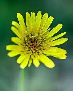 Någon som vet vad denna blomma heter? #ilovesweden #igsweden #igdaily #summer #sommar #linköping #linköpinglive #meralink #ig_sweden #ig_masterpiece #ig_great_pics #flower #blommor #blomma #flowers #floweroftheday #jonas_fotograf #macro #macrophotography