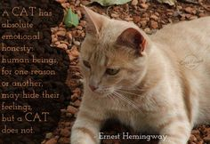 A #CAT has absolute emotional honesty: Human beings, for one reason or another, many hide their feelings, but a #CAT dosen;t.