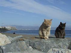 cats at the beach 魚、飛ばないかなぁ。