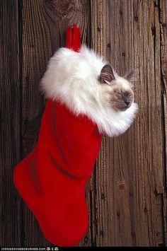 Les chats connaissent les endroits les plus douillets, c'est bien connu...