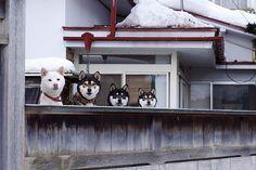 Oh hey | Flickr - Photo Sharing!