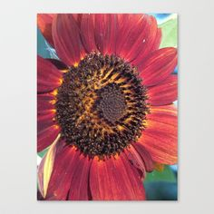 The Red Sunflower Canvas Print