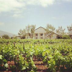 #adwinery #aguadulce #aguadulcewinery #winery #vineyard