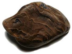 Petrified Wood, Illawarra Coal Measures, NSW (Permain, 250 MYA) Field Find (2017)