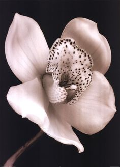 #orchid in Black and White #flowers
