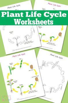 Plant Life Cycle Worksheets and Diagrams - Free Printable