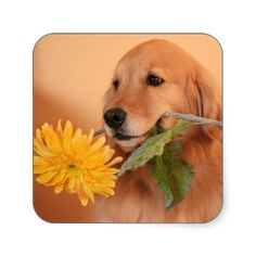 Golden Retriever With Flower Stickers. Sold one customized sheet to a customer in Irvine, CA :)