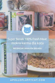 Czy jesteś ciekawy co mają do zaoferowania polscy producenci karm dla kotów? Tym razem przetestowaliśmy karmę znanej polskiej marki Super Benek. Czy stanęła na wysokości zadania? W tym poście poznasz moją szczegółową analizę, efekty testów i przemyślenia na temat karmy Super Benek 100% Fresh Meat. Fresh Meat, Catio, Apollo, Karma, Apollo Program