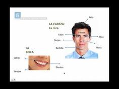 Partes del cuerpo humano en español - ejercicios de vocabulario Spanish Language, Foreign Language, Health Unit, Save Video, Spanish 1, Teaching Materials, Body Parts, Youtube, The Unit