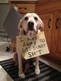I ran away to eat bunny sh*t.