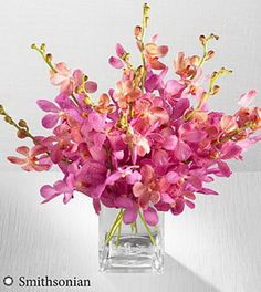 FTD Smithsonian Pink Champagne Mokara Orchid Flowers  10 Stems  VASE INCLUDED