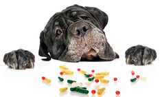 By Dr. Drew Sullivan, Director, Medical District Veterinary Clinic at Illinois I've been talking to a lot of clients about the common household items that can be toxic to their pets. According to data from the Animal Poison Control Center, based in Urbana, Ill., prescription human medication ranks in the top 5 toxins that harm...