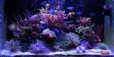 Tank of the Month Roundup - January 2014   Home Aquaria