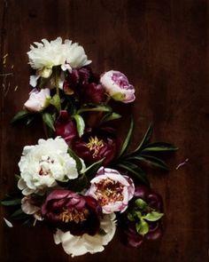 purple and white flowers - love peonies
