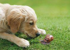 Gefahr für unsere Hunde Dogs, Cute, Animals, Taurus, Animales, Animaux, Pet Dogs, Kawaii, Doggies