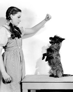 The Wizard of Oz--Photo Dorothy Wizard Of Oz, Wizard Of Oz 1939, Dorothy Gale, Old Hollywood Stars, Vintage Hollywood, Hollywood Glamour, Wizard Of Oz Quotes, Judy Garland, Famous Women