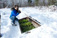 previous pinner wrote: Nikki Jabour and one of the cold frames in February! Check out her gorgeous greens! Winter gardening in Halifax, Nova Scotia, Canada!!!
