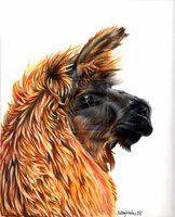-llama- by EatToast