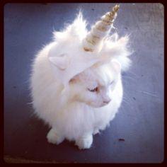 Unicorn Cat, won't you be mine? So majestic.