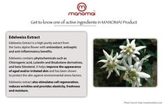 Edelweiss Extract Benefits in All Manomai Around-The-Clock Facial Serum for Every Type Skin
