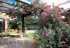 O pergolado de madeira maçaranduba sustenta os galhos com flores coloridas. Projeto do paisagista Felippe Giardino