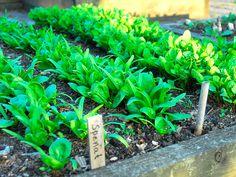 Vegetables, Plants, Gardening, Hem, Kitchen, Garden, Lawn And Garden, Animals, Cuisine