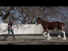 Budweiser Clydesdale Commercial - Super Bowl 2013 - YouTube