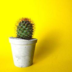 Concrete Planter, Cactus, Succulent Plant Pot, Handmade, Includes Cactus or Succulent