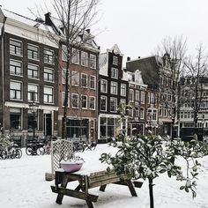 "154 Likes, 2 Comments - Gaelle ✨ #SageOnEarth (@sageonearth) on Instagram: ""Haarlemmerbuurt neighbourhood is my favourite so far. Away from the usual famous canals but full of…"""