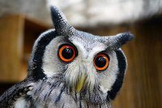 "Whooooo !!!!!                     Macro shot of ""Bizarre Owl"" by John Oakley"