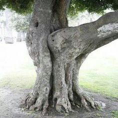 True Tree Love.. lolz