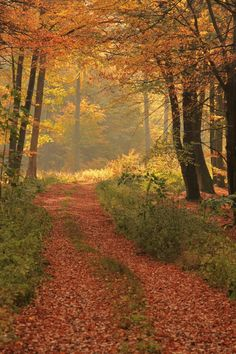 Through the autumnal forest - null