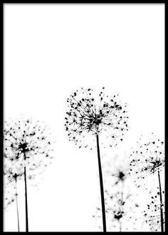 Allium Flower No2 Poster