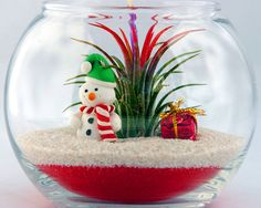Snowman Bubble Air Plant Terrarium Christmas by AirPlantShopCom