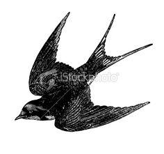 "Képtalálat a következőre: ""bird Swift draw"" Golondrinas Tattoo, Sparrow Tattoo, Watercolor Bird, Cool Tattoos, Bird Tattoos, Skin Art, Free Vector Art, Swallow, Tattoo Drawings"