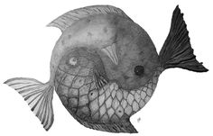 Hand drawn yin yang fish