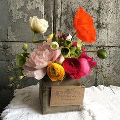 TTH box blooms