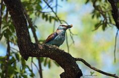 A very happy 2020 to you. These past few weeks left us in no doubt that we are living out here in the African bush. As the first rains fell there was a lot of snake and insect movement. The migratory birds, like Woodlands Kingfisher, are back in their full splendour and we even had…Read more →