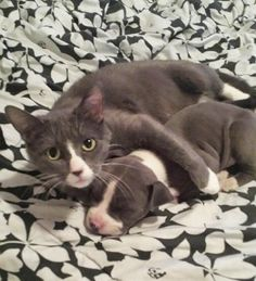 40 Animal Sisters and Brothers from Different Mothers, http://babepup.com/similar-animals-different-mothers/ Check more at http://babepup.com/similar-animals-different-mothers/