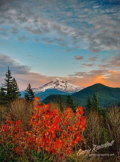 Autumn, Lolo Pass, Mt. Hood National Forest, Oregon.  Photo: Gary Randall, via Flickr