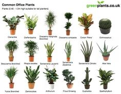 office plants on pinterest office plants interior plants and house