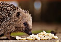 How to Create a Hedgehog-Friendly Garden Hedgehog Cage, Hedgehog Pet, Things To Know, Things To Come, 5 Things, Pet 5, Modern Garden Design, Herb Garden, Your Pet