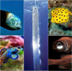 un paseo por el mundo: Los siete peces más extraños del planeta