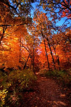 Autumn at Starved Rock State Park, Illinois Such a beautiful place to hike. Loved the fall colours. I recommend it