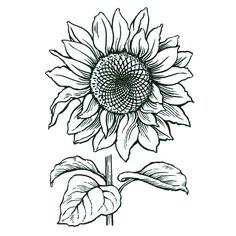 Cling Jumbo Sunflower - Stampendous Stamps