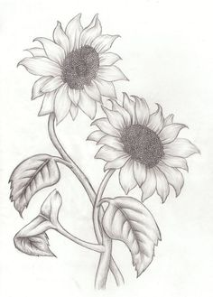 Sunflower Drawing on Pinterest | Sunflower Paintings, Watercolor ...