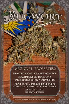 MUGWORT, WITCH, HERB, APOTHECARY, book of shadows, divination, concecration, psychic, tarot, white witch parlour