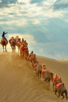 Camels crossing the Kubuqi Desert in China..... Here you relax with these backyard landscaping ideas and landscape design. #Relax more with this #free #music with #BinauralBeats that can #heal you: #landscaping #LandscapingIdeas #landscapeDesign